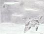 مشاهده و تعقیب بشقاب پرنده در تهران – سال1355