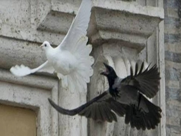 pope francis dove black crow 2014